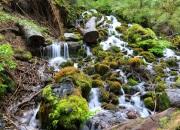 im Nothofagus-Wald am Lago Caburgua / Llaima