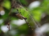 Parque Nacional Cahuita: Spinne, recht groß!