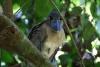 Tortuguero Kanu-Tour: seltsamer Vogel (Name vergessen)