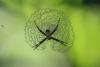 Wanderung im Tortoguero Nationalpark: tolles Spinnen-Nest