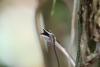 Wanderung im Tortoguero Nationalpark: Schlange hat Beute gemacht