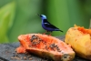 Arenal: Vögel direkt vor dem Restaurant