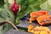 Arenal: Vögel direkt am Restaurant
