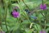 Arenal: Kolibri am Hotel