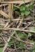 Arenal National Park: farbenprächtige Echse