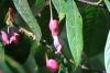 Reserva Monteverde: Blüten