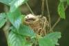 Reserva Monteverde: Kolibri-Nest mit Küken drin