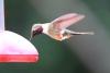Reserva Monteverde: Kolibri an einer Fütterstelle