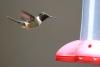 Reserva Monteverde: Kolibri an Futterstelle