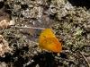 El Saltón, kleine Wanderung, jede Menge Schmetterlinge