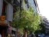 Stadtführung: Ein blühender Baum, mitten im Oktober