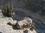Arequipa - Canyon de Colca