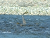 Die ersten Stunden auf dem Fluß, Vogel beim Fischen
