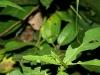 Nachtwanderung: Insekten-Tarnung vom feinsten