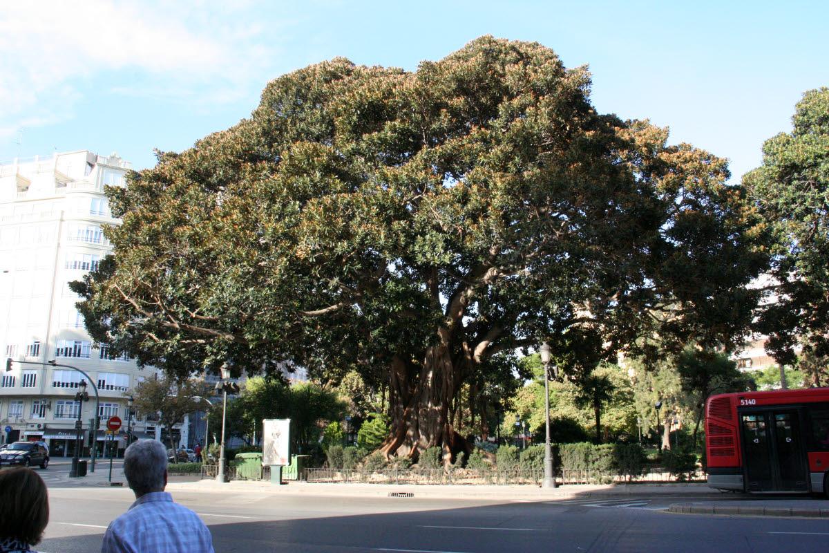 Stadt-Rundgang am 1. Tag: große Bäume