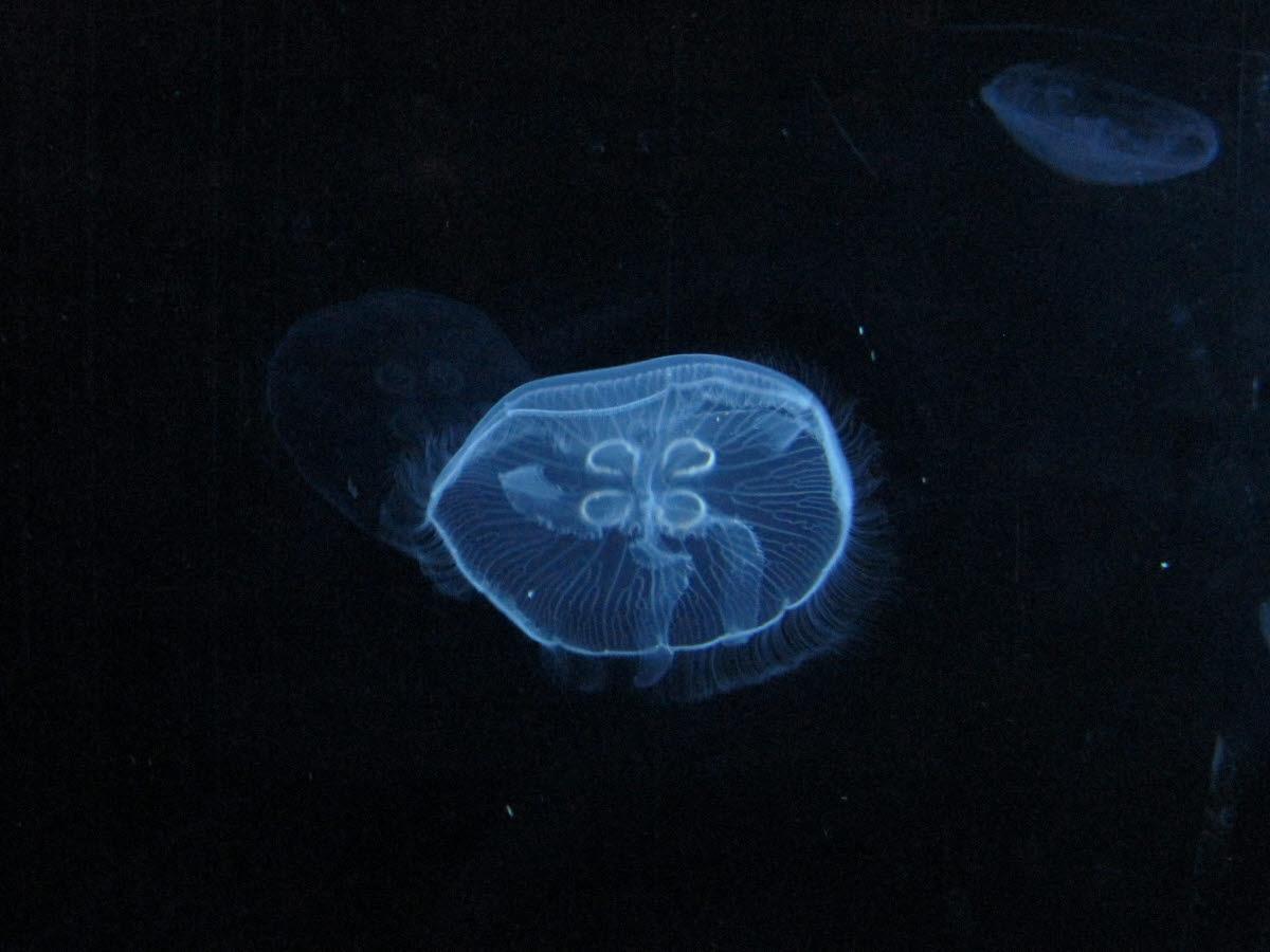 2. Tag, Ciudad de las Ciencias: Oceanográfico