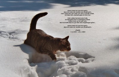 Charlie da Silva - Nesselwang im Schnee