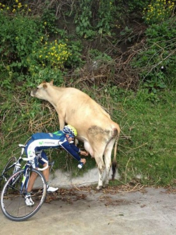 biker-stops-to-milk-cow